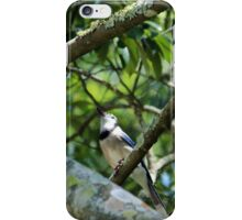 Blue Jay Looking Up iPhone Case/Skin
