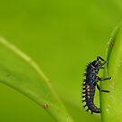 Ladybird larva by relayer51