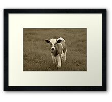 Brown and White Calf Framed Print