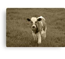 Brown and White Calf Canvas Print