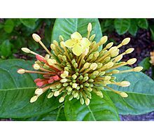 One Full Bloom Photographic Print
