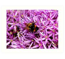 Bee on Allium Art Print