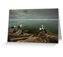 Australian pelicans sunbathing Greeting Card