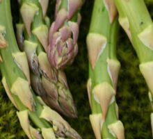 Moss and Asparagus Sticker