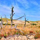 Dunes' Death Valley....Cape Cod by Poete100