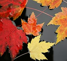 Colorful Fall Leaves by mistyrose