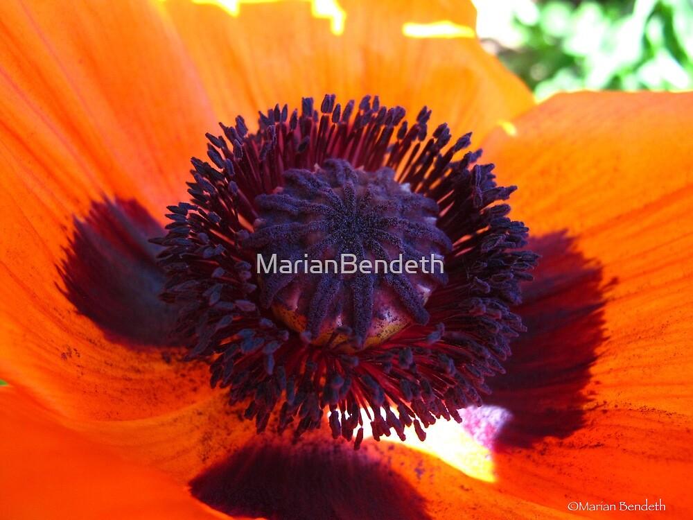 June Poppy by MarianBendeth
