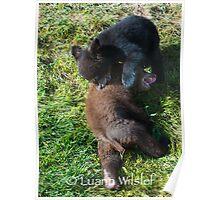 Young Bear Cubs Poster