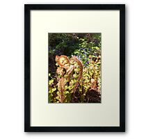 fairies down the garden  Framed Print
