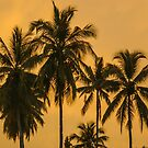 Palms Against an Evening Sky by Werner Padarin