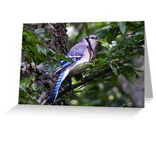 Blue Jay in a tree peeking from behind a leaf Greeting Card