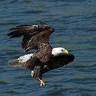 Low Over the Water by DawsonImages
