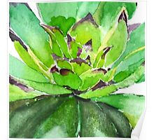 Green succulent plant 1 Poster