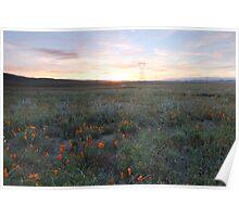 Poppy Fields Sunset Poster