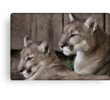 Cougar Brothers II Canvas Print