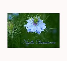 Nigella Damascena *3* by SmoothBreeze7