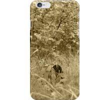 Antique Farm Equipment in a Field of Grass iPhone Case/Skin