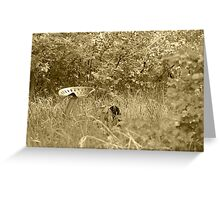 Antique Farm Equipment in a Field of Grass Greeting Card
