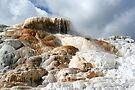 Mammoth Hot Springs  by Tori Snow
