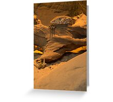 The Perentie Greeting Card