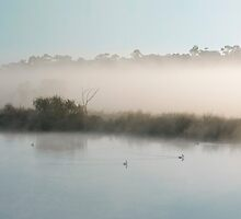 Fog lifting over the River Murray, Murray Bridge SA by Mark Richards