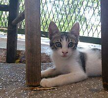Athenian Cat by ElinaMic