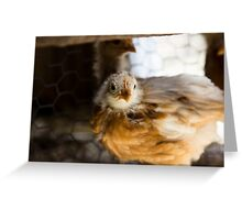 ARE YOU LOOKIN AT ME?? Greeting Card