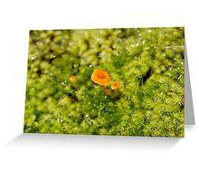 Under the Mushroom Greeting Card
