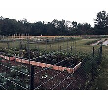 Community Gardens Photographic Print
