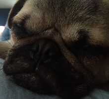 Pug Puppy Close-Up by LongLiveLuke
