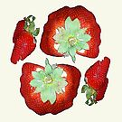 berri by vampvamp