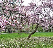 Central Park Trees by andrewtaylor27