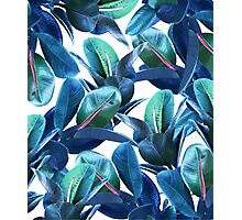 Rubber Plant #redbubble #lifestyle Photographic Print