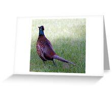 Pheasant. Greeting Card