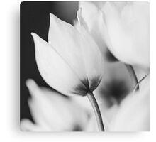 Flower Bud in Mono Canvas Print