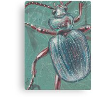 Shiny Beetle Canvas Print