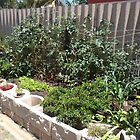 Backyard raised garden by BigAndRed