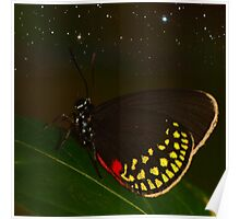 Starry Butterfly (I.17) Poster
