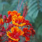Red and Gold by wprweb