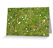 Grass With Daisies and Weeds Greeting Card