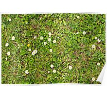Grass With Daisies and Weeds Poster