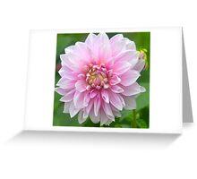 Soft Pink Dahlia Greeting Card