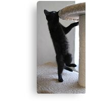 Nope not up there! Canvas Print