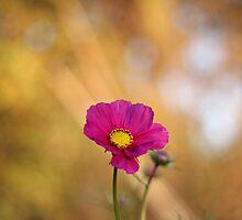 Blush by NaomiGrace