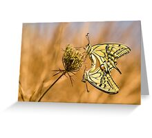 Two mating Southern swallowtail (Papilio alexanor) butterflies Greeting Card