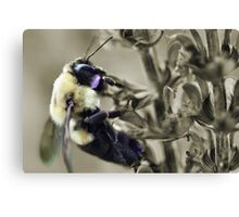 Selective Bumble Canvas Print