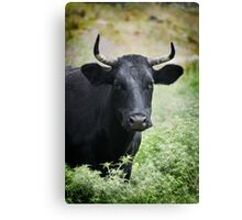 Dont come any closer, I warn you Canvas Print