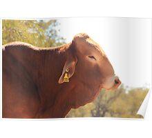 Bull!!!... Poster