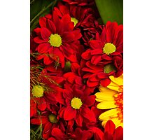 Scarlet Flowers Photographic Print