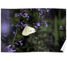 White on Purple Poster